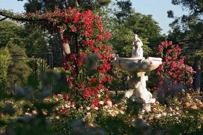 parque del retiro rosaleda